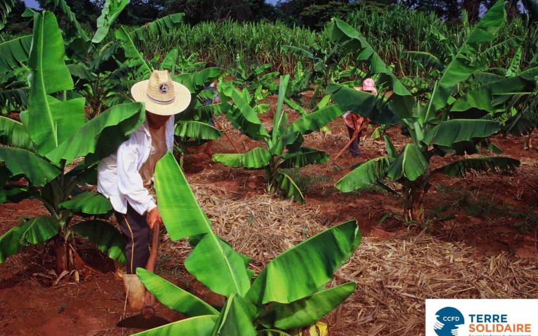 L'écologie avec le CCFD-Terre Solidaire