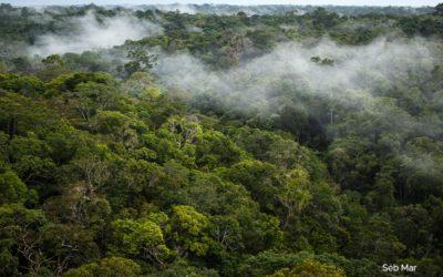 «Querida Amazonia»