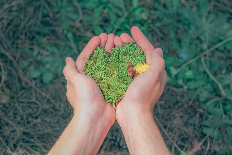 deux mains collées ouvertes avec de la mousse verte à l'intérieur
